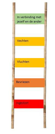 Polyvagale ladder